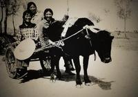 鄉村紀事:生產隊的老牛