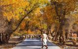 中國又一處胡楊林被發現,沿途縣城美到醉,僅有極少數遊客識貨