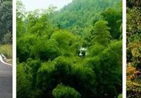 黑麋峰國家森林公園——長沙旅遊景點