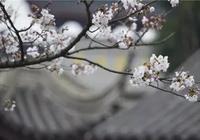 陳後主的美人張麗華:玉樹後庭花