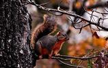 動物圖集:深秋季節的林中落葉和小松鼠