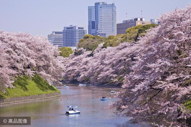 日本即將迎來櫻花季,日本幾大賞櫻最佳地點要安排起來了