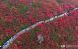 春季踏青賞花又一好去處——貴州黔東南丹寨龍泉山