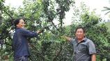 農村大叔專職在家種植假葡萄:12塊錢一斤,水果店老闆搶著來批發