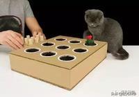 做出這臺打地鼠機,你就是貓咪眼中最好的鏟屎官