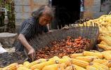 河南深山藏百年石頭村,今剩幾戶人家,滿樹柿子沒人要留給鳥吃