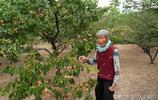 """83歲農村老奶奶上樹摘仙果""""麥兒黃""""來待客,看看是個啥稀罕物"""