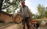 麥收時節,河南80歲老人駕著騾子拉碌碡碾麥,城裡人沒有見過