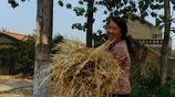 山村採風聽72歲大叔說懷了3個月小牛犢沒了,但他不後悔,啥情況