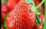 草莓的價值
