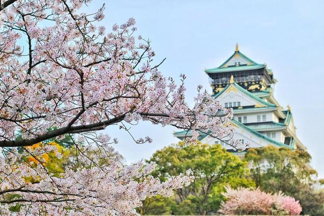 攝影欣賞——一組櫻花(sakura)攝影圖片