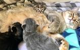 女孩家的貓生了三隻小奶貓,當她想要拿小貓玩玩的時候……