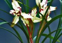 松樹嘍和堅果殼製作成蘭花植料的方法