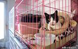 沒有工作的她收養流浪貓狗16年花費50萬,此事和家人關係降到冰點