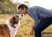 《一條狗的使命2》溫情治癒中略顯失望