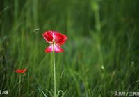 若到江南趕上春,千萬和春住——讀詩誦詞