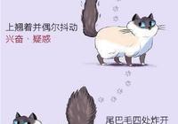 日繪瞭解貓咪小心思,沒貓也看的津津樂道