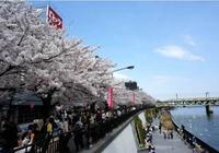 日本既發達素質也高,為何很多日本人還要來中國,看完才知不容易