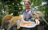 野生動物園內,幾隻萌化的猴子不知外面的世界,美國又遇超強颶風
