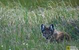 如此美麗的北極國家野生動物保護區,你們忍心傷害它嗎?