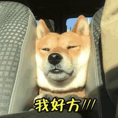 柴犬和秋田犬是同一種犬嗎?