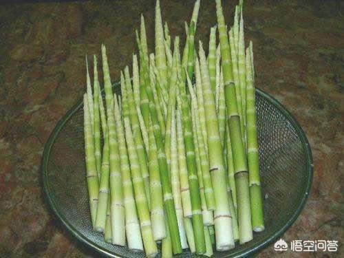 今天我去竹林裡掰到這麼多竹筍,一頓吃不完,怎麼辦?這種筍子好吃嗎?