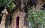 直擊樹包塔