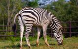 動物圖集:動物集錦