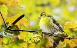 10月壁紙圖集:飛鳥翱翔,杜鵑花邊杜鵑啼