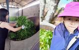 她13歲外出打工做保姆,21歲回到大山裡炒茶:要讓更多人知道這裡