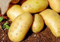 你知道餐館的土豆絲為什麼這麼好吃?看了你就知道了