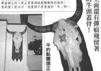 海賊王作者尾田榮一郎藏品大公開,七武海的靈感來源終於出現!