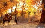 護林員寒冬半夜騎駱駝找牧民接生,回家妻子大出血昏迷