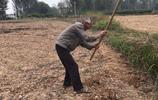 67歲老人種了10畝農田,聽老人說出真實收入,你別吃驚