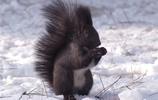 13張全世界最美的松鼠照片,沒有比松鼠在萌的鼠了