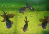 在飼養觀賞魚中,我這些奇特的習慣魚友們可曾有過?