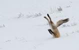 直擊年度最佳的野生動物搞笑獎作品,這群動物成精了
