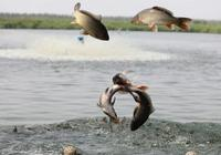 巴彥淖爾市磴口縣著力打造生態休閒漁業體驗區