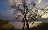 """風景攝影:""""錯綜盤結,風姿卓越""""盤點不同環境下的不同樹木"""