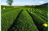 風景圖集:黑河嫩江農場現代農業旅遊區風景美圖