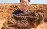 這些年,全國各地挖出的太歲都被人買去了嗎,網友說就是肉靈芝