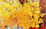 古老的遺樹種-陽光下的胡楊