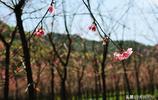 山裡的花開了 五華區陡坡村 昆明市民鄉村遊 週末遊的首選之地