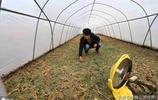 安徽90後帥氣小夥兒,大學畢業回農村養殖昆蟲,帶領鄉親共同致富