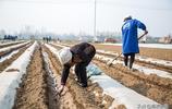 安徽夫妻靠種甘蔗,每年收入十萬元,帶動周邊村民致富
