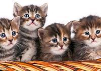 不再害怕貓咪常見問題(耳蟎、貓癬、滴蟲)