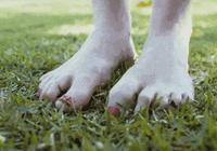 如何改善腳氣?低碳與腳氣的關係?