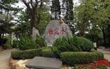 遊燕窩嶺婚慶公園,一片鶯歌燕舞