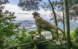 梧桐——白雲山