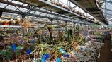 國外園藝大神的多肉溫室,這裡面有的都是珍貴品種
